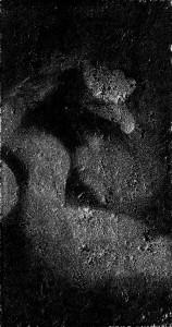 embryo2_klein